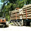 Holztransportorganisation_006